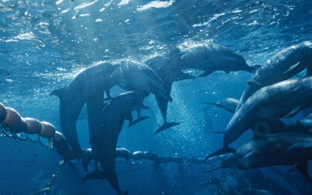 MSC vernichtet Delfine und die Biodiversität der Meere
