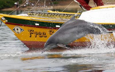 "Projektreport Winter 2020 – Delfin-Oma ""Zipper"" schaut vorbei"