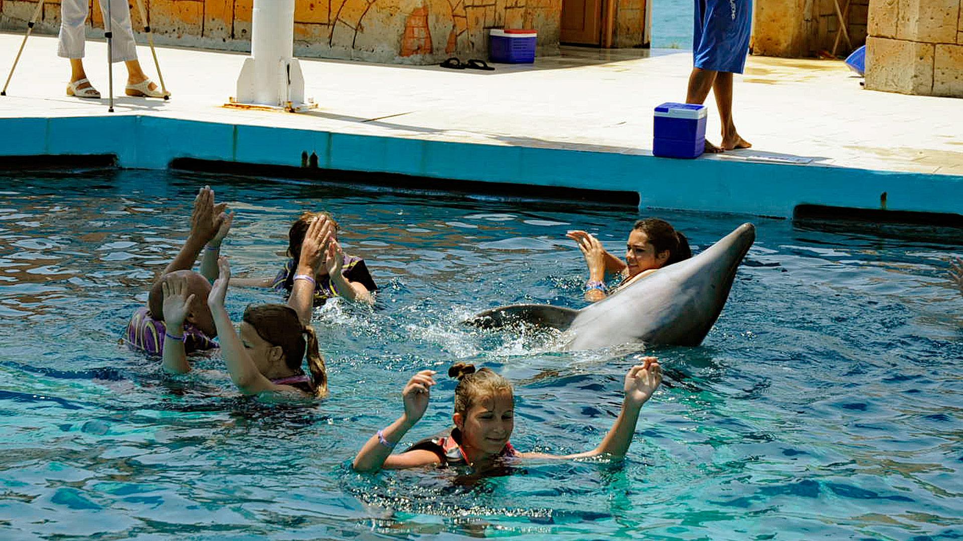 Zu viel Nähe zu großen Tieren kann gefährlich sein. Das gilt auch bei dem Delfin in Eckernförde!