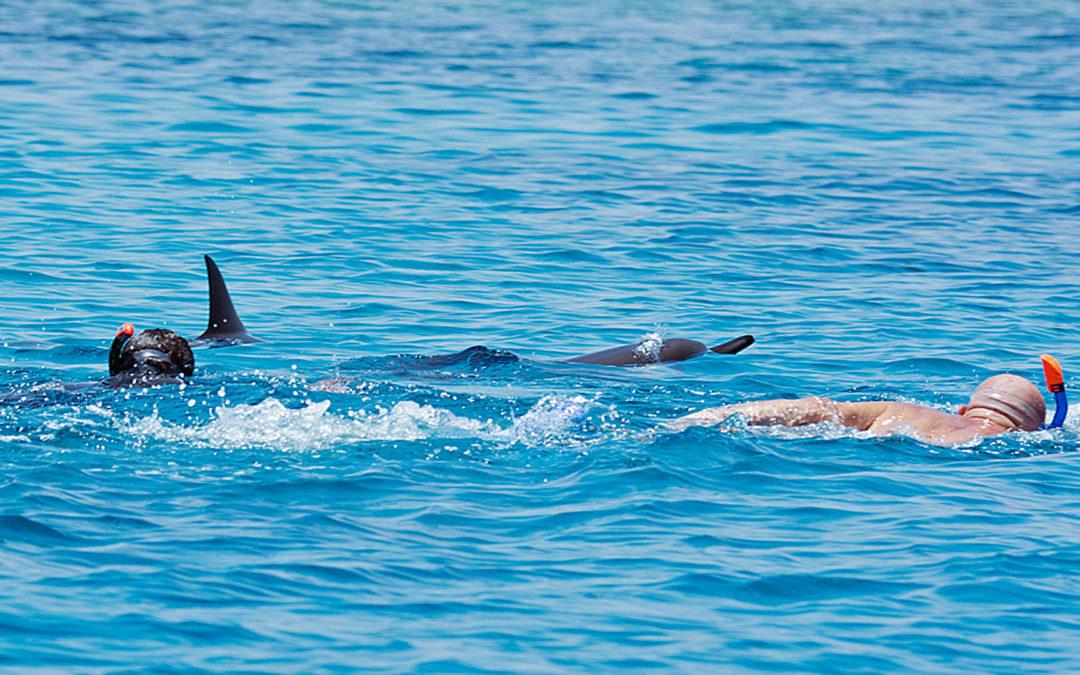 ITB Berlin: Warnung vor unkontrolliertem Schwimmen mit Delfinen