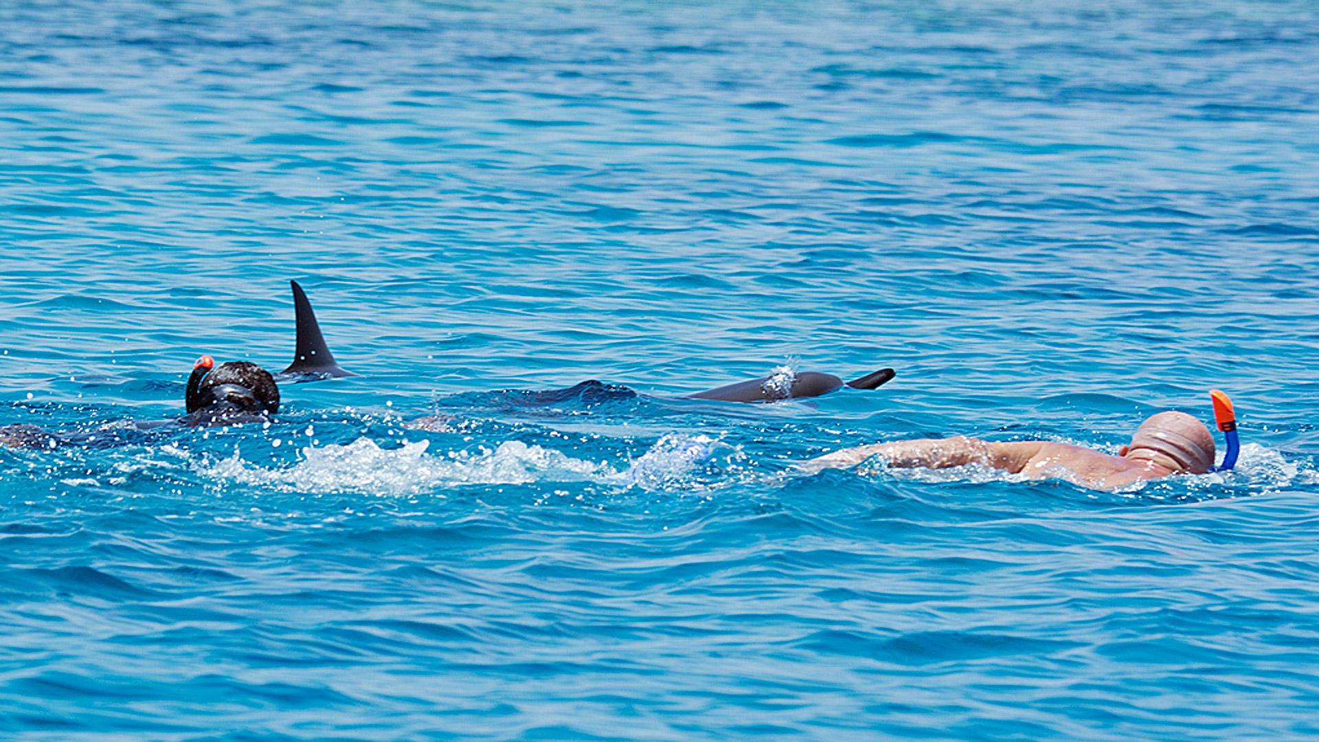 Schwimmer bedrängen zwei ruhende Spinnerdelfine.