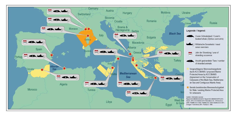 Mittelmeer Karte.Zu Viel Lärm Im Mittelmeer Gefährdet Wale Und Delfine Grd