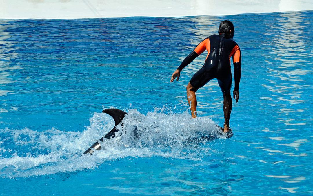 Erfolg für den Tierschutz: Club Med verabschiedet sich weltweit von Wal- und Delfinshows