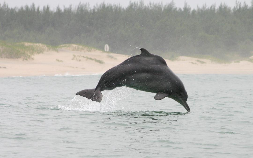 Delfine im Nebel – Report vom Sichtungsteam