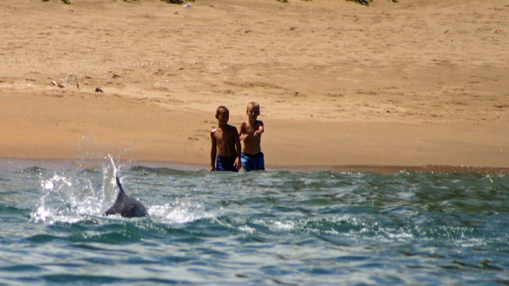 Bleifarbener Delfin schwimmt auf Strand und zwei Kinder zu.