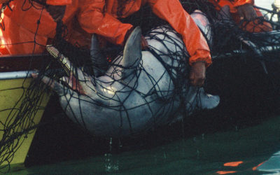Endlich frei: Hainetze an Stränden in Südafrika abgebaut!