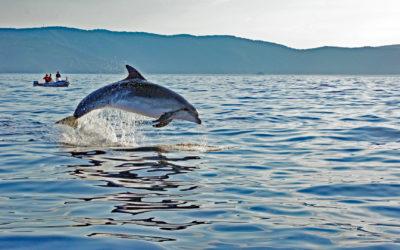 Adria-Delfine bitte melden! Mitmachaktion für Urlauber