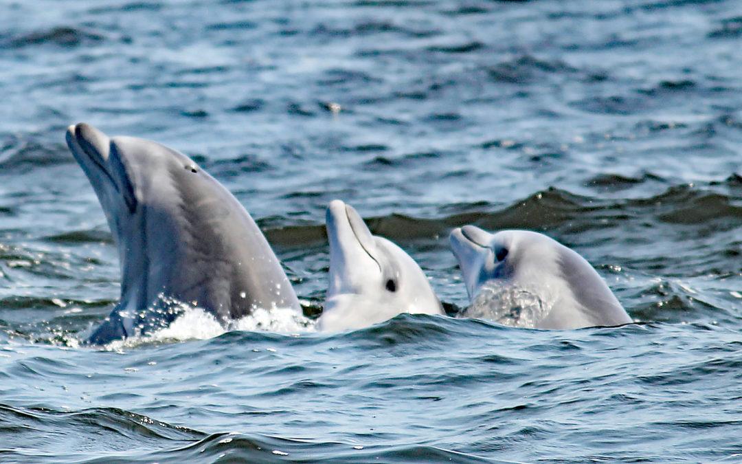 Projektupdate: Ortstreue Delfine aus Pisco