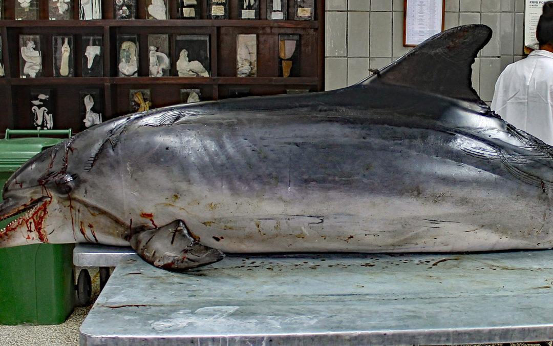 USA: Hohe Belohnung für Ergreifung von Delfin-Killer