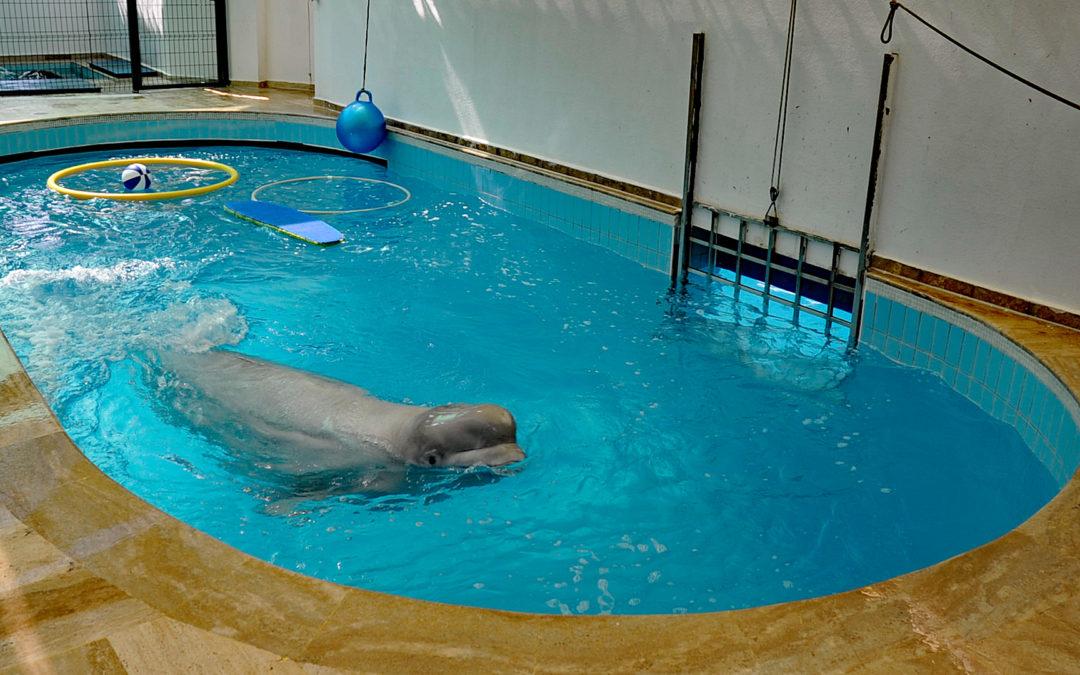 Kanada verbietet Wale und Delfine in Gefangenschaft