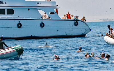 Hurghada: Brutale Delfinhetzjagd beim Schwimmen mit Delfinen