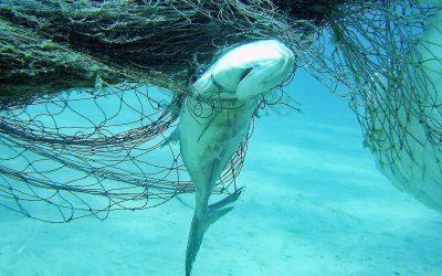 Ghost Fishing: Geisternetze aus den Meeren holen!