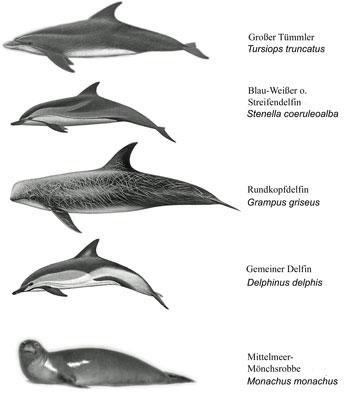 Viele Wale datieren Neue york-Moll-Dating-Gesetze