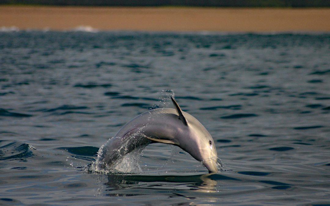 Delfinschutz in Südafrika: Projekt-Update #1 – 2018