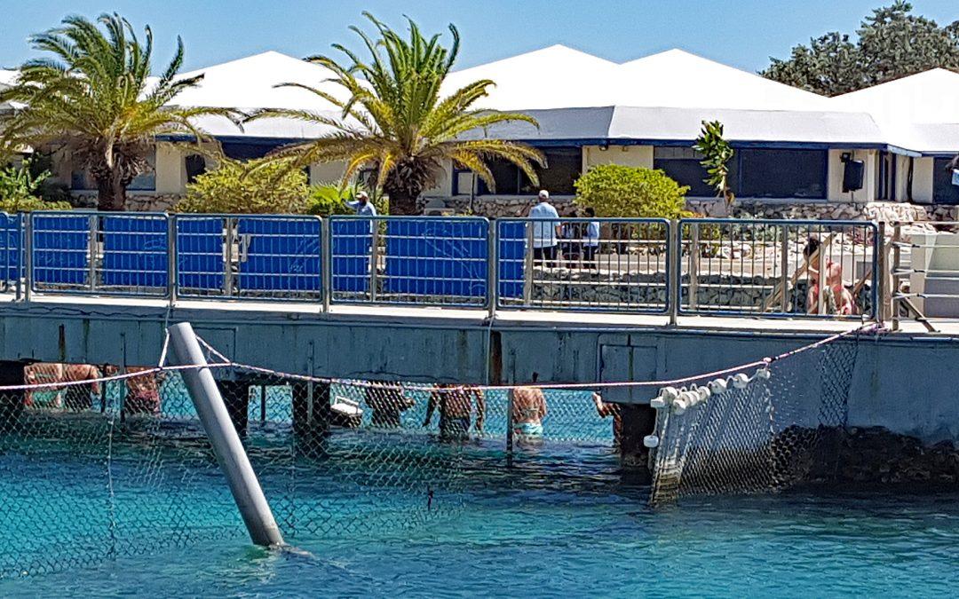 Das stille Leiden der Therapie-Delfine in Curaçao