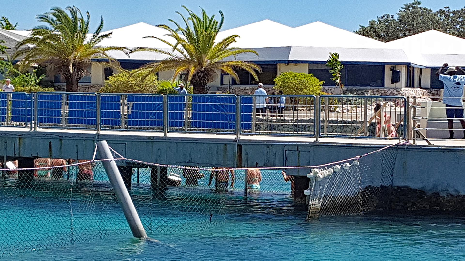 Dolphin Academy Curacao.