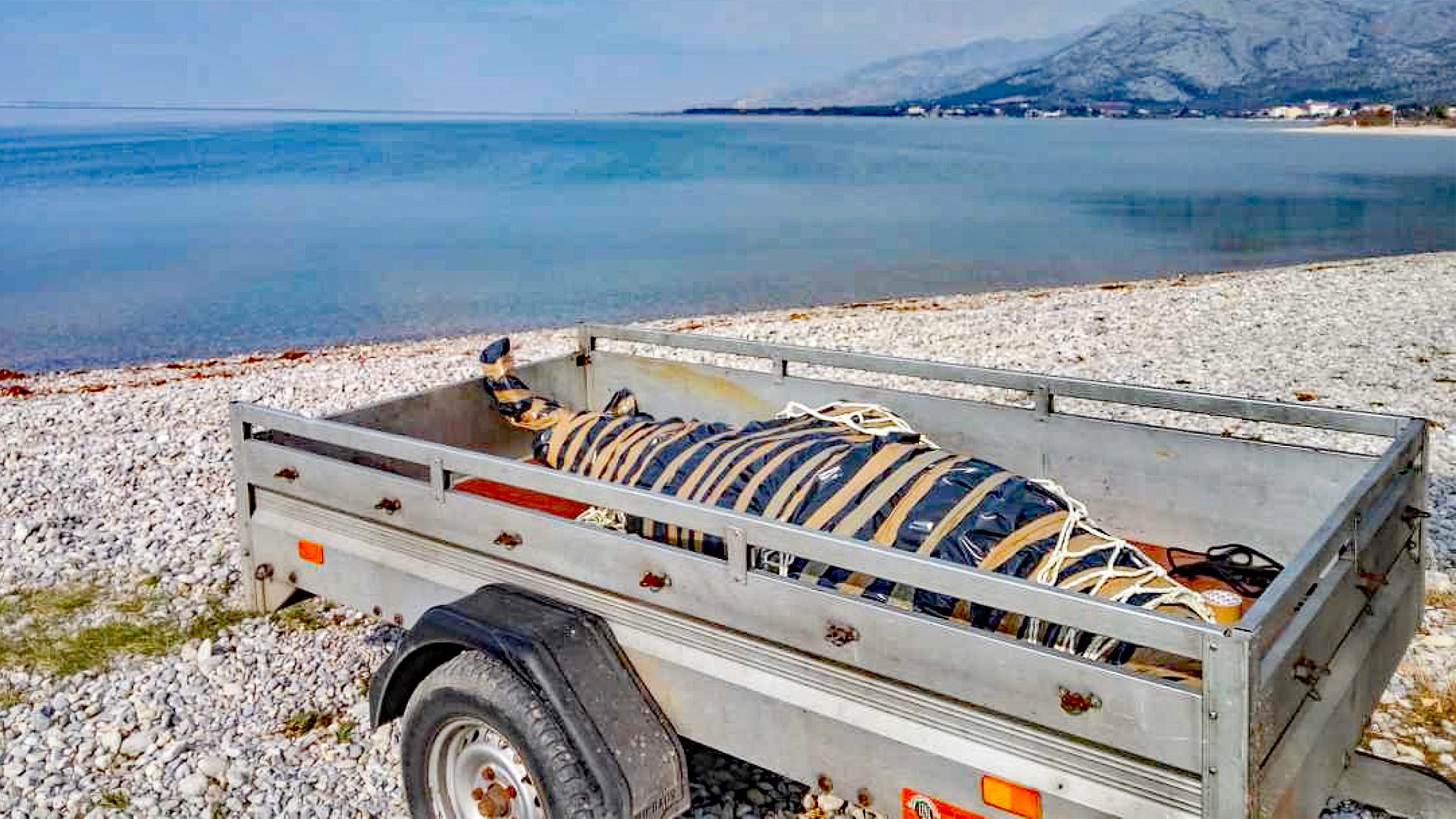 Bergung eines toten Adria-Delfins