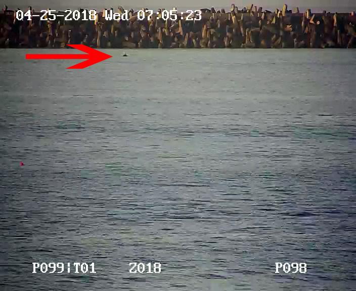 Delfinsichtung via LiveCam am 25.04.2018 - Richards Bay