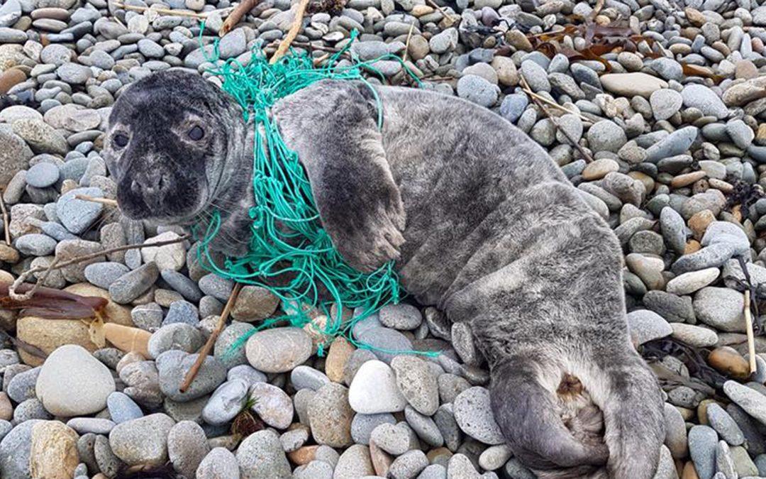 Irland: Delfine und Wale sollen nicht länger in Geisternetzen sterben
