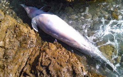 Über 100 tote Delfine in Florida – Bauern verursachen Massensterben