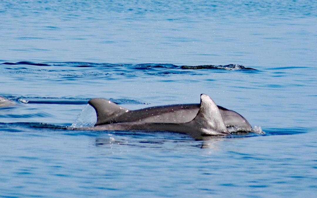 Die Delfin-Kinderstube in der Paracas-Bucht