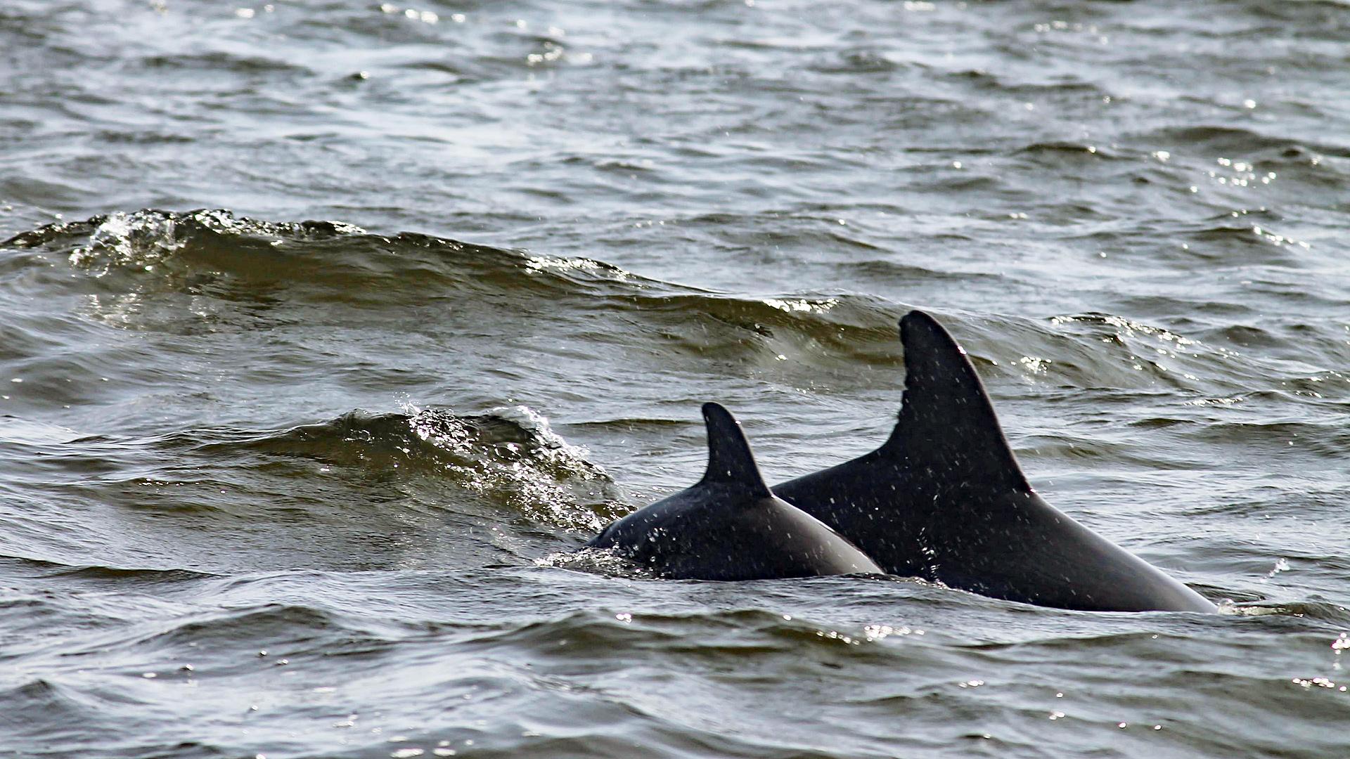 """Mit einer Patenschaft für """"Trinity"""" den Neustart des Delfinschutzprojekts in Peru unterstützen!"""