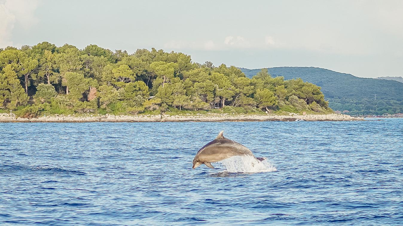 Delfinsichtung Adria von Florian Hiltmair