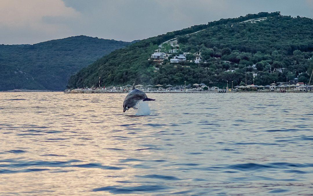 Istrien: Sanfter Delfintourismus bei Vrsar