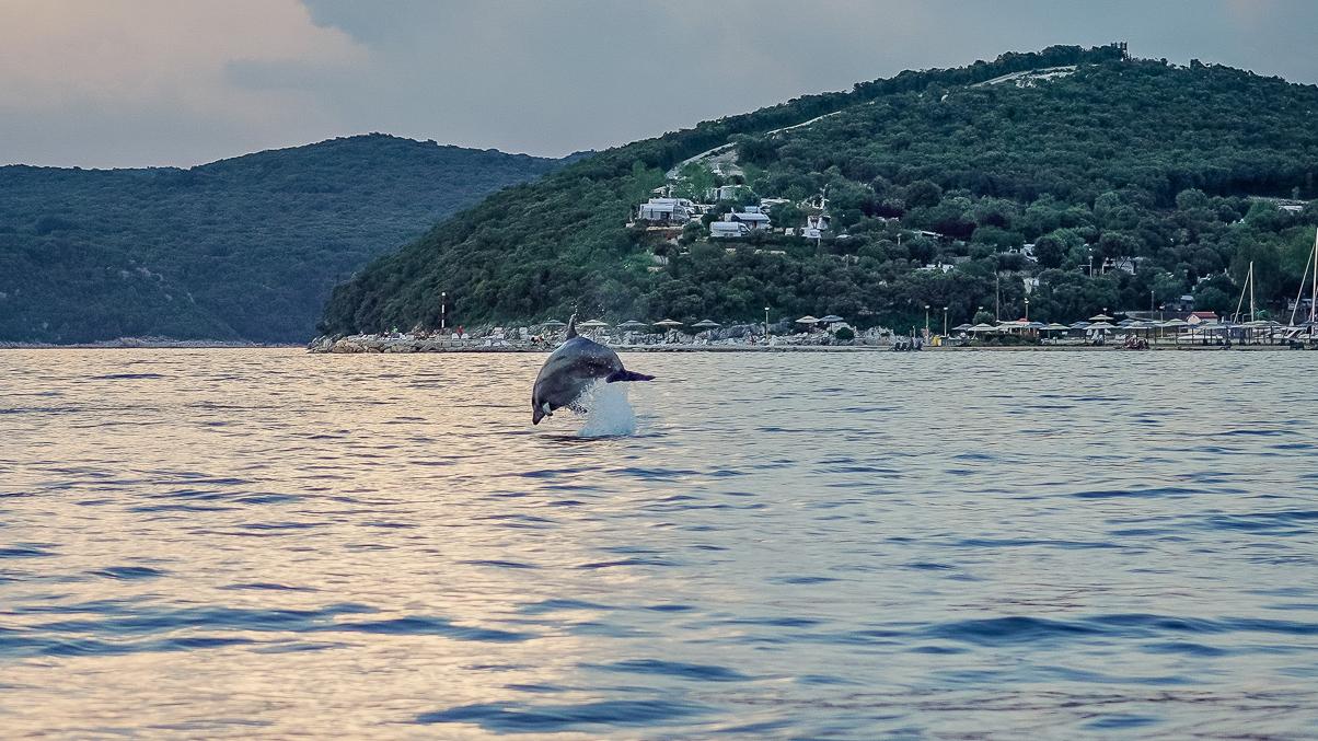 Delfinsichtung Adria von Florian Hiltmair.