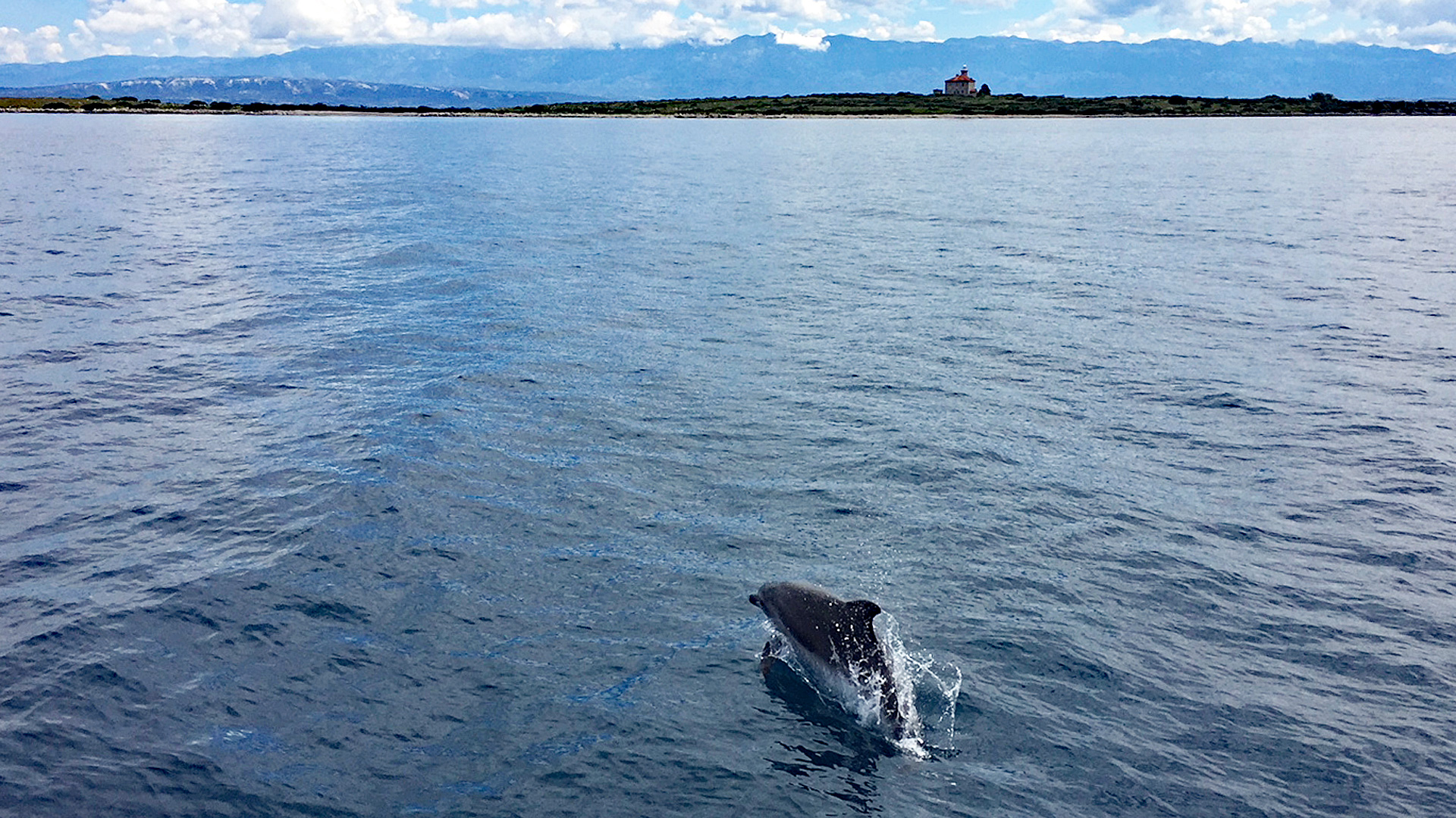 Delfinsichtung in der Adria