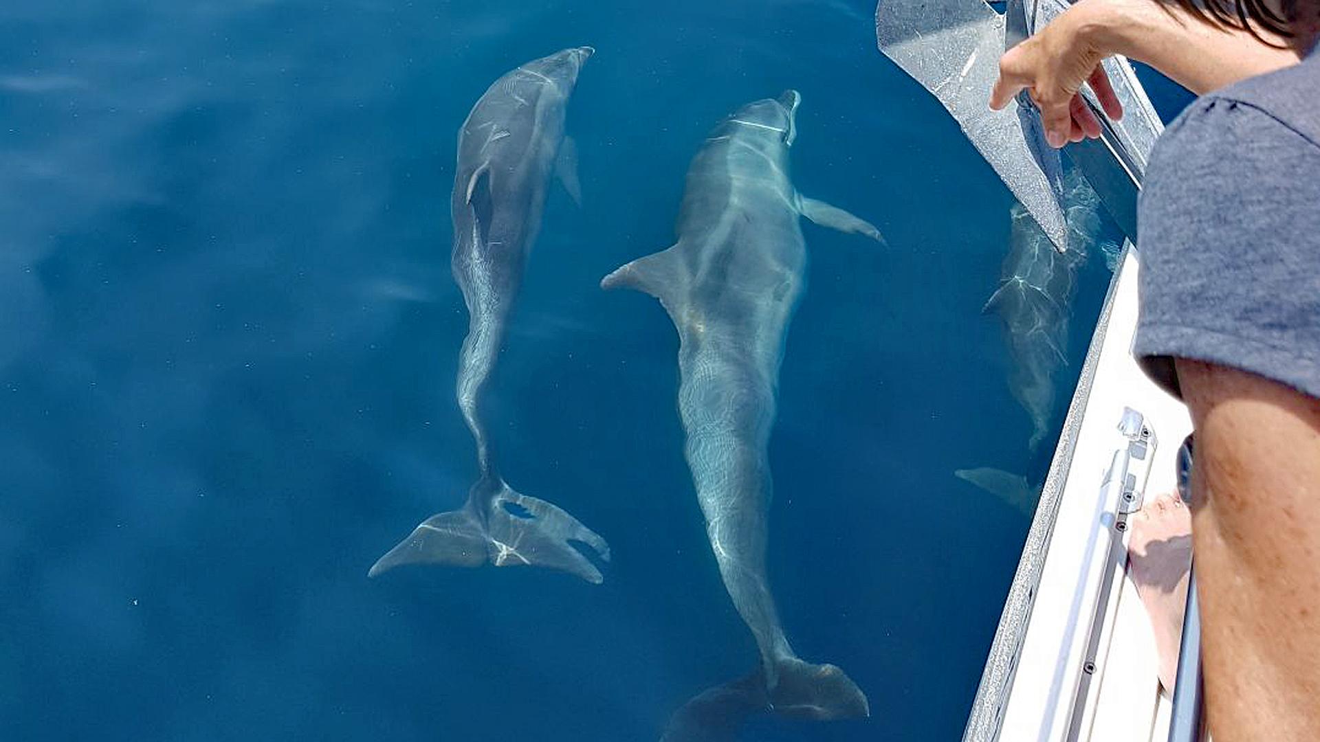 Delfinsichtung in der Adria.