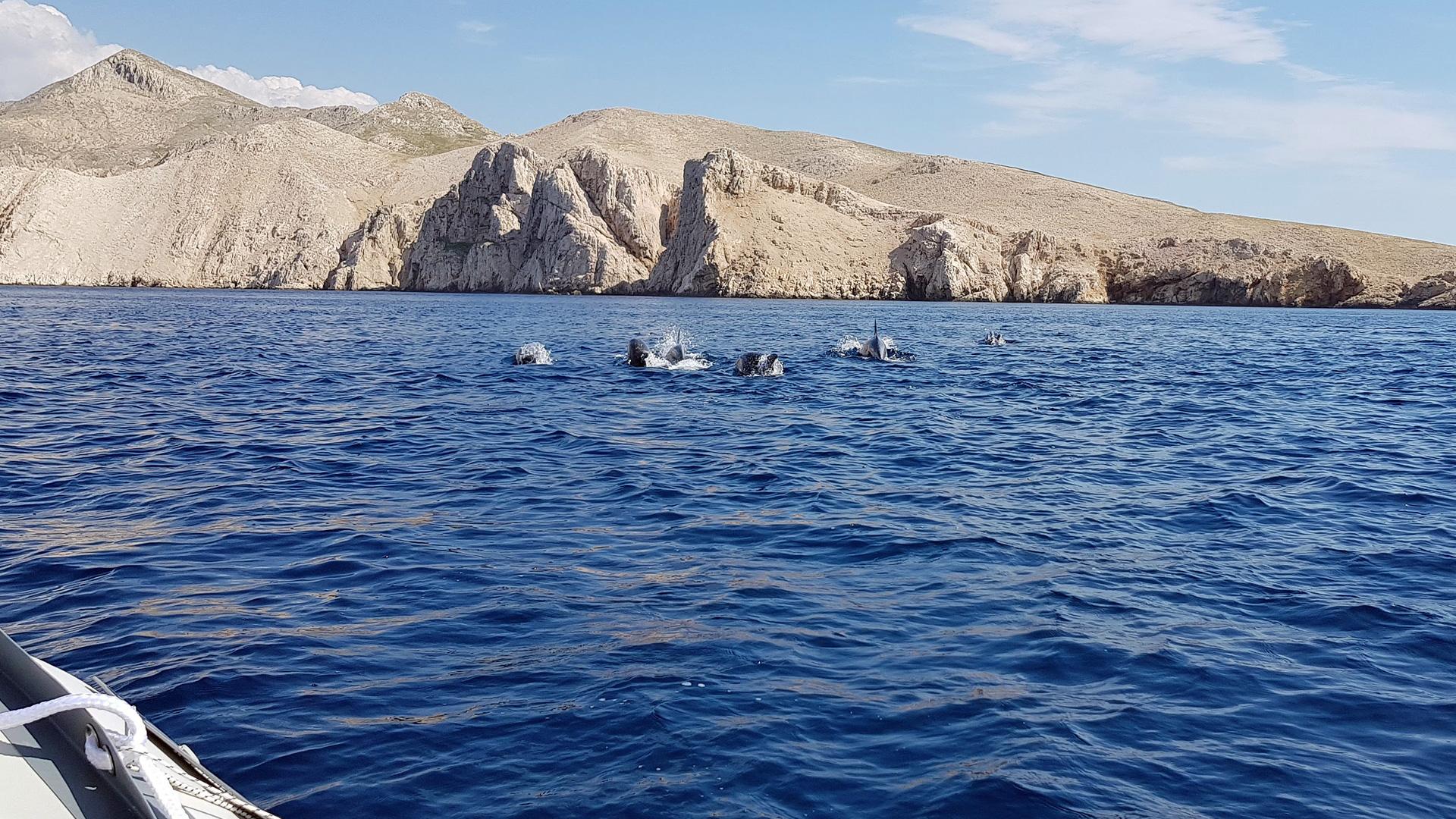 Delfinsichtung Adria vom Juli 2018.