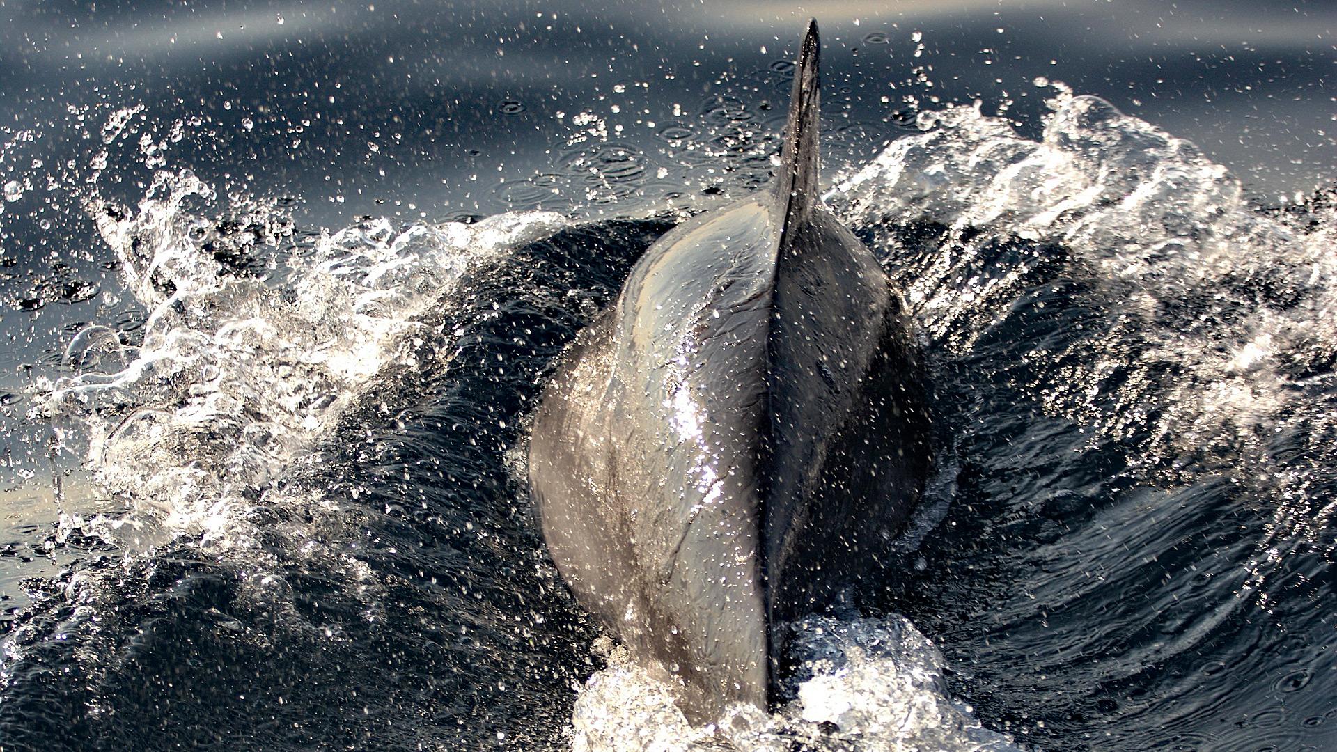 Delfinsichtung Adria.