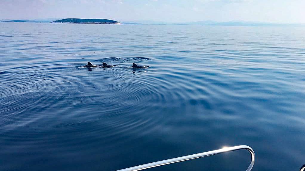 Delfinsichtung vor Zirje.
