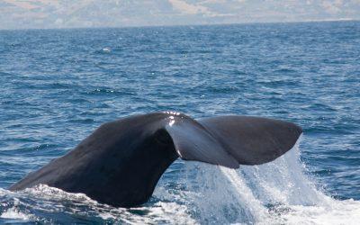 Wie alt werden Wale und Delfine?