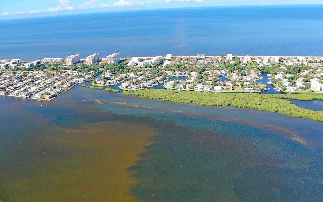 Die rote Flut: Red Tide in Florida vernichtet Delfine