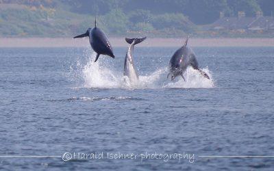Münchner Delfinschützerin auf riskantem Taucheinsatz