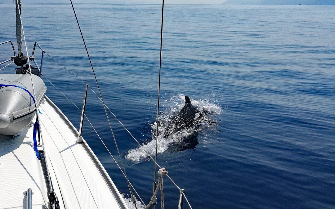 Adria-Delfine gesucht! Mitmachaktion für Touristen