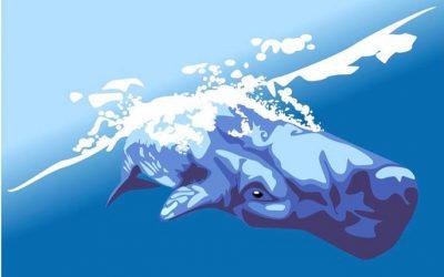 Dominica auf dem Weg zur ersten Whale Heritage Site der Karibik