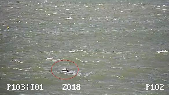 Tote Meeresschildkröte vor Richards Bay – Report vom Sichtungs-Team