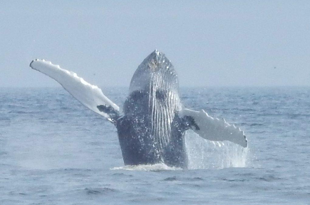Nachhaltiges Whale Watching auf Neufundland