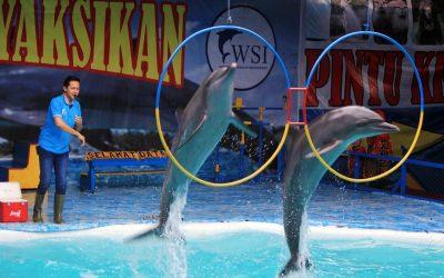 Delfinquälerei in Indonesien: Delfine im Wanderzirkus