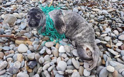 Britische Forscher entdecken Mikroplastik in allen Meeressäugern