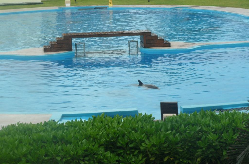 Delfinarium in Mexiko
