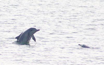 Delfinsichtungen im August – Report vom Sichtungs-Team