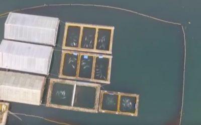 Walgefängnis: Das Geschäft mit Belugas und Orcas