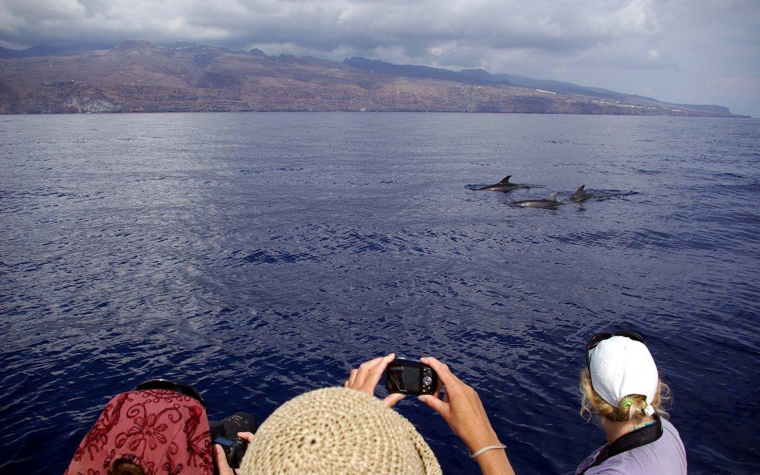 """Sommernews von der """"Insel der Delfine"""""""