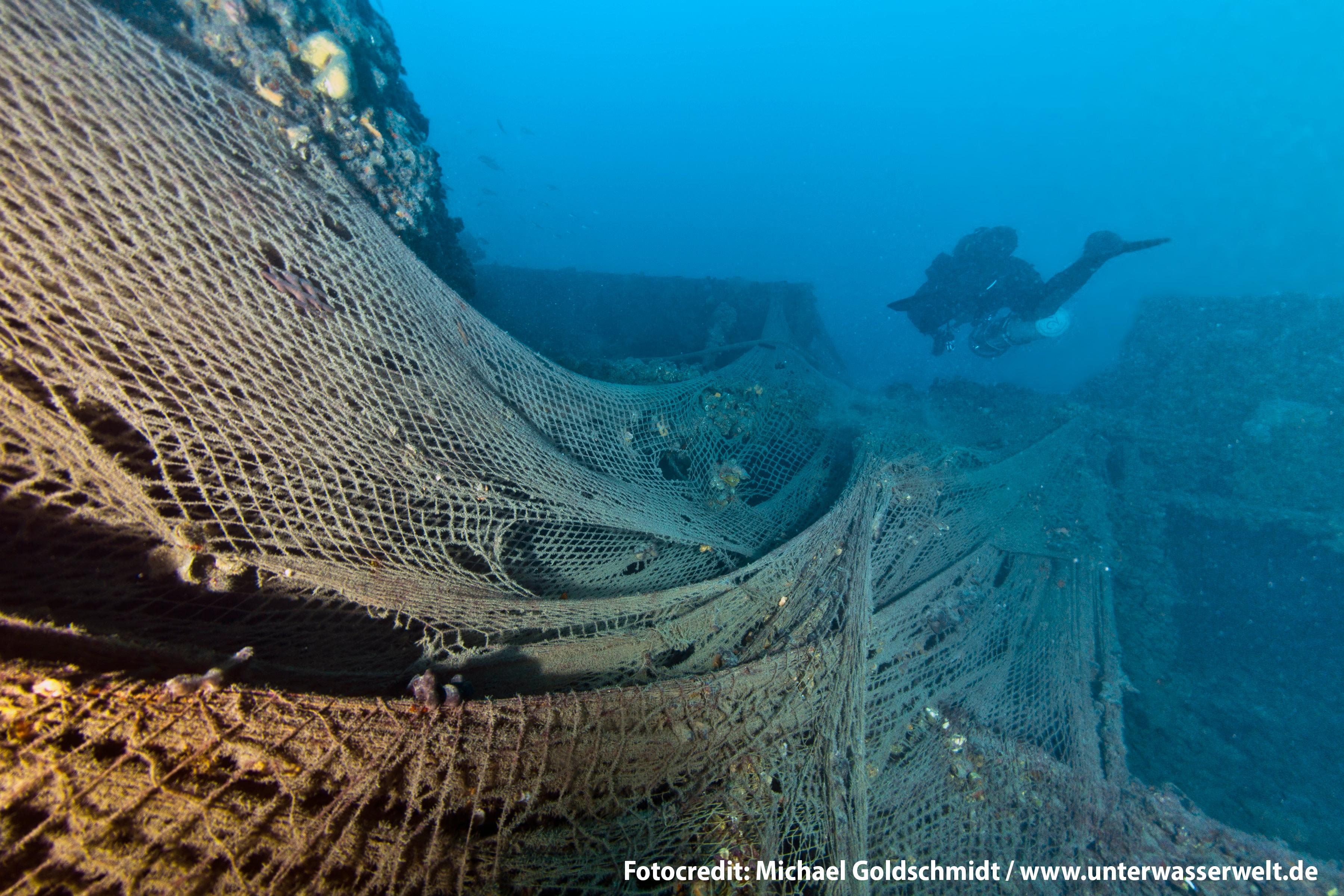 Rettet die Schweinswale: Mit einer Patenschaft für Schweinswale