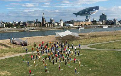 Aktion: Pottwal Strandung in Düsseldorf – Todesursache Plastikmüll