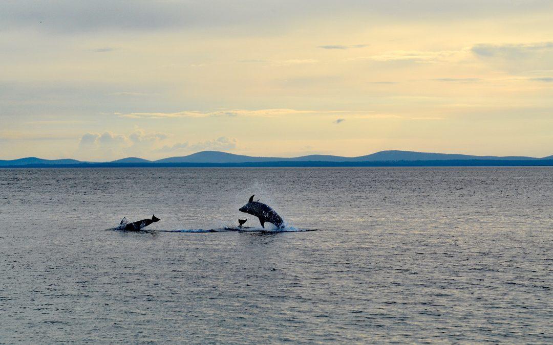 Delfinsichtungen in der Adria 2019
